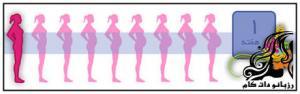 دانستنی های هفته اول بارداری