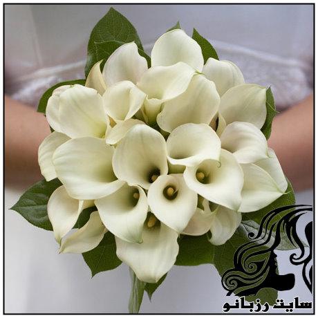 http://up.rozbano.com/view/1561742/rzbano-08-4.jpg