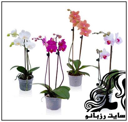 آموزش نگهداری و پرورش گل ارکیده