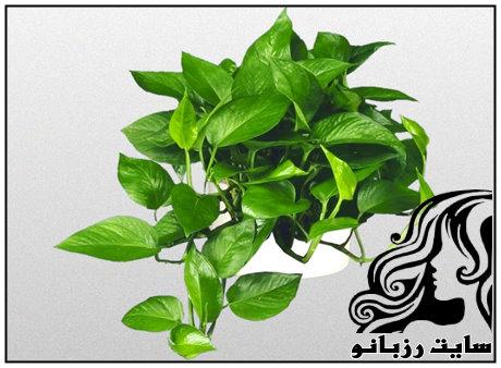 گیاهانی مناسب برای خانه های مدرن