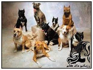 حکم نگهداری سگ خانگی در اسلام