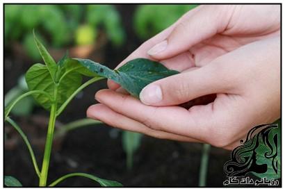 آموزش گردگیری گیاهان آپارتمانی