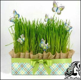 زمان مناسب برای کاشت سبزه