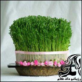 راهنمای کاشت سبزه عيد نوروز