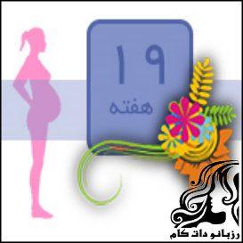 همه چیز راجع به  هفته نوزدهم بارداری