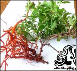 شناخت مضرات و خواص گیاه روناس