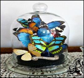 آموزش ساخت حباب زیبای پروانه