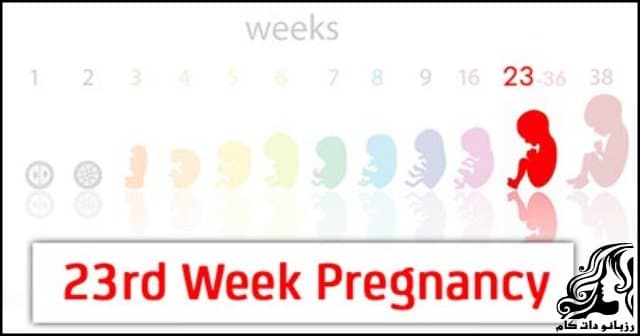 http://up.rozbano.com/view/2799792/Twenty%20third%20week%20of%20pregnancy.jpg
