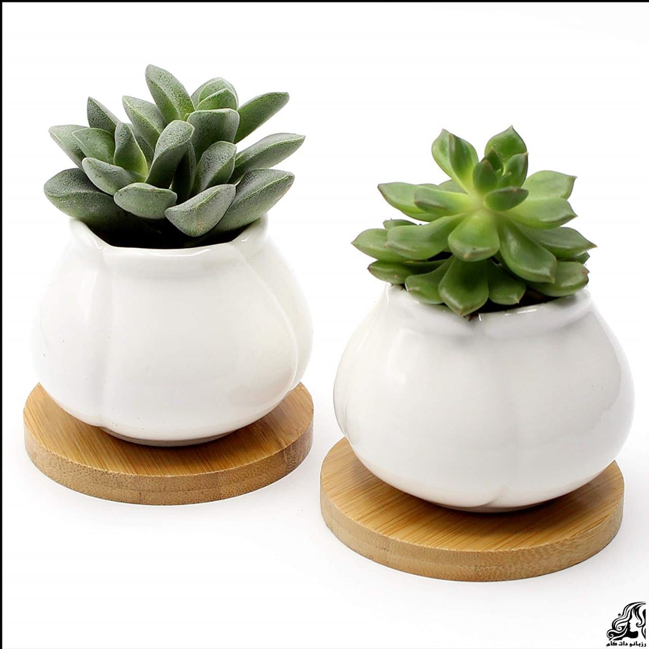 http://up.rozbano.com/view/2939278/pots%20significant%20agent%20of%20change%20at%20home-07.jpg