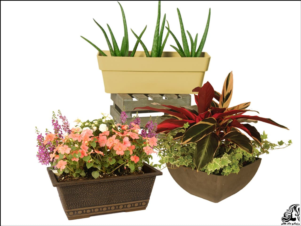 http://up.rozbano.com/view/2939279/pots%20significant%20agent%20of%20change%20at%20home-08.jpg