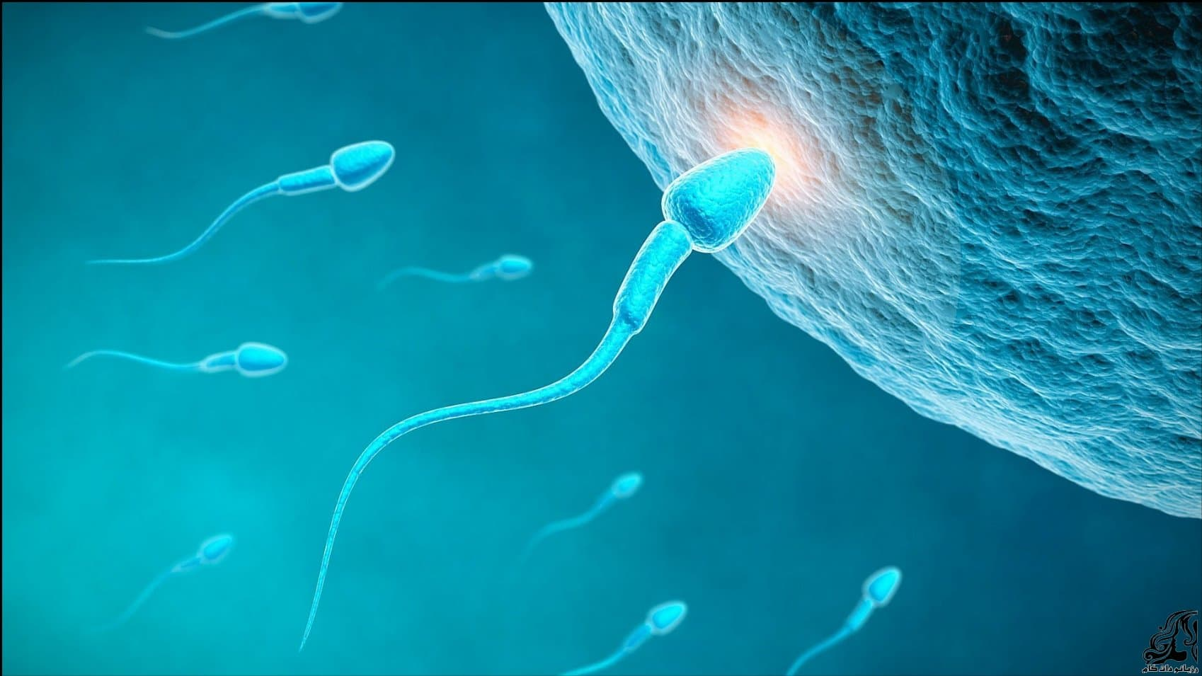 https://up.rozbano.com/view/2940482/factors%20and%20methods%20of%20infertility%20treatment-02.jpg