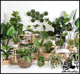 معرفی 6 گل آپارتمانی زیبا و خاص