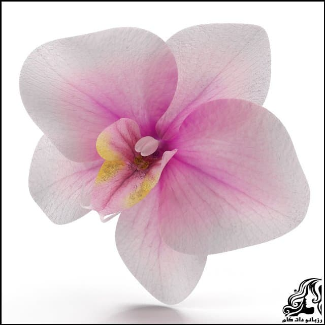 https://up.rozbano.com/view/3061648/Orchid%20flower.jpg
