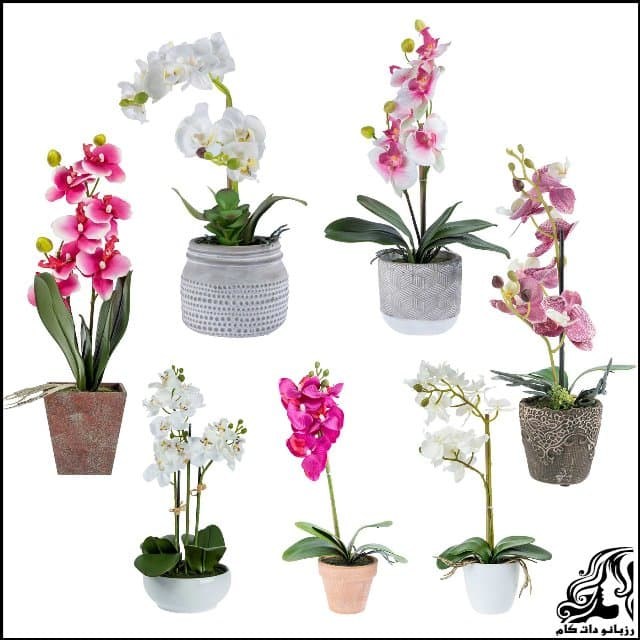 https://up.rozbano.com/view/3061649/Orchid%20flower-01.jpg