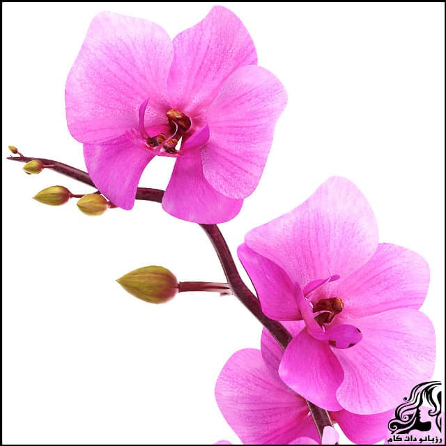 http://up.rozbano.com/view/3061650/Orchid%20flower-02.jpg