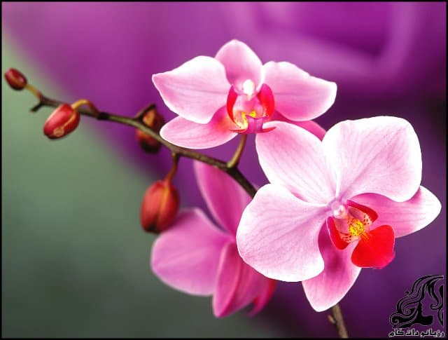 http://up.rozbano.com/view/3061651/Orchid%20flower-03.jpg
