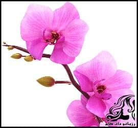 آموزش مراقبت و نگهداری از گل ارکیده