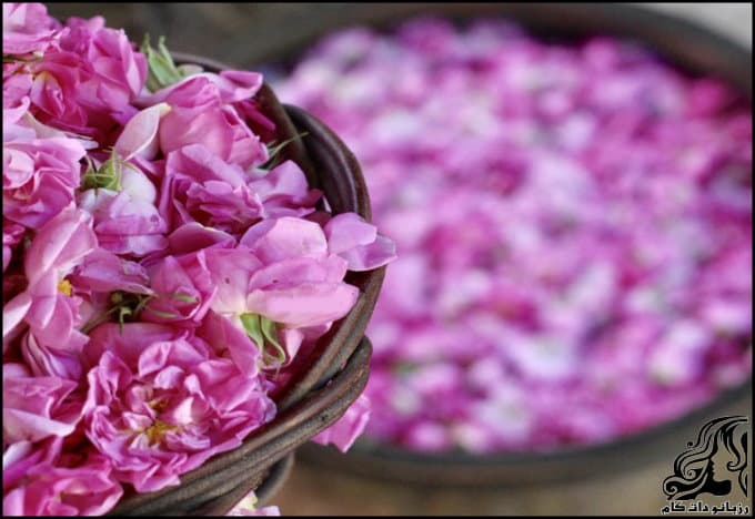 https://up.rozbano.com/view/3080830/What%20you%20need%20to%20know%20about%20rose%20water.jpg