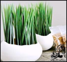 آموزش سبز کردن بذر خرما برای سفره هفت سین