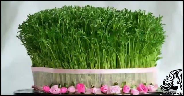 http://up.rozbano.com/view/3090204/Garden%20cress-02.jpg