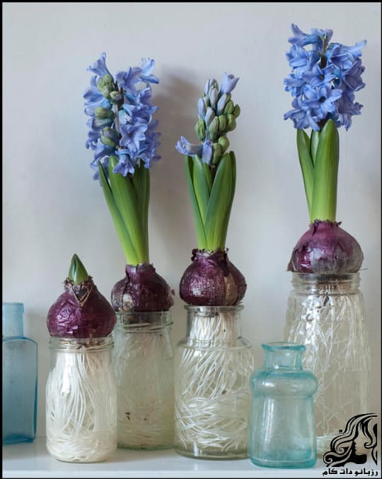 https://up.rozbano.com/view/3302091/Blooming%20Hyacinths-02.jpg