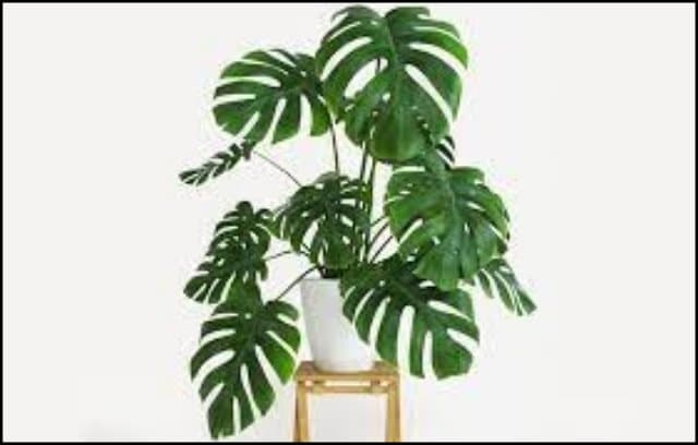https://up.rozbano.com/view/3358191/Introducing%20the%20best%20evergreen%20apartment%20flowers-01.jpg