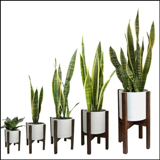 https://up.rozbano.com/view/3358192/Introducing%20the%20best%20evergreen%20apartment%20flowers-02.jpg